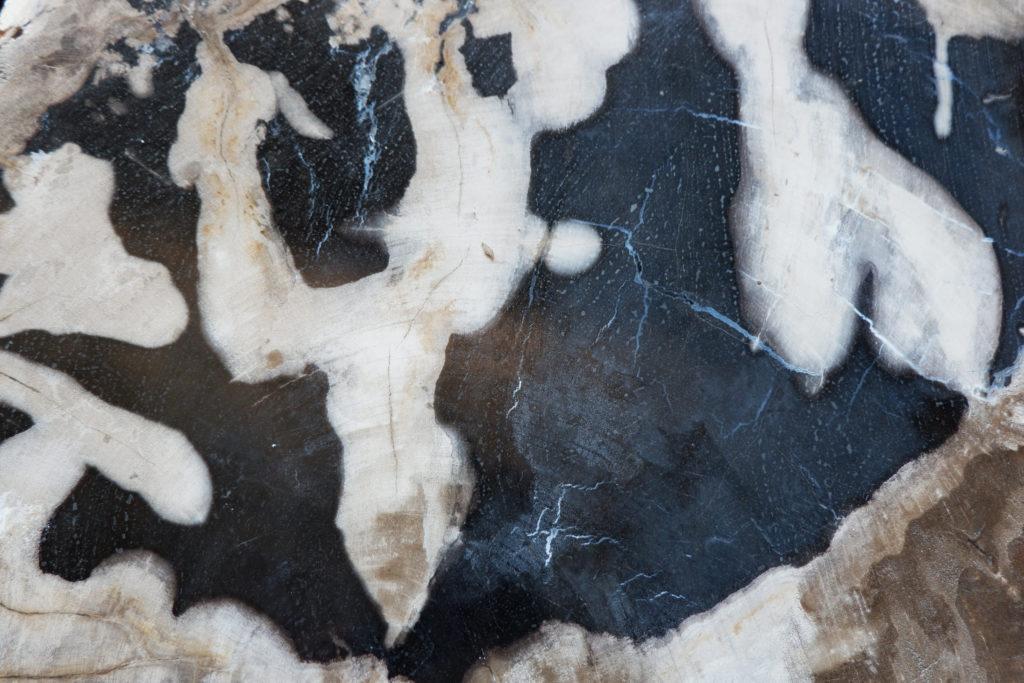 gros plan bois fossile